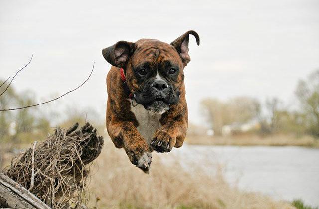 боесер в прыжке