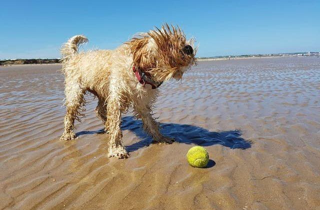 Кокапу играет с мячиком на пляже