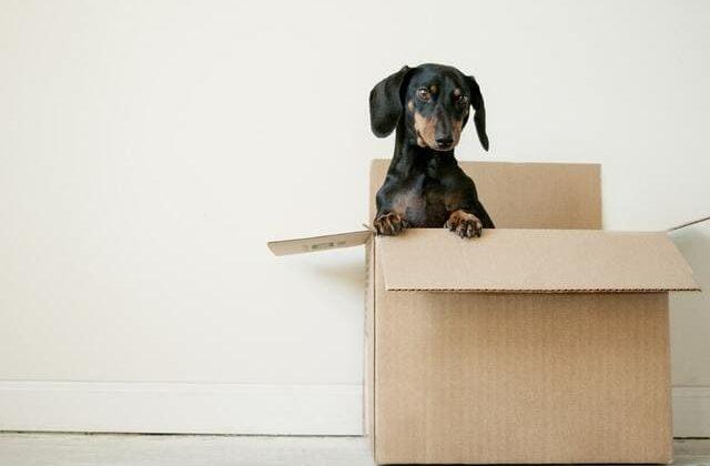 Кроличья такса – содержание в домашних условиях