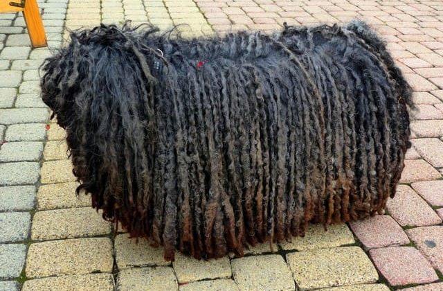 Порода – венгерская овчарка