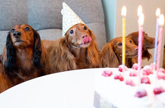 такса день рождения