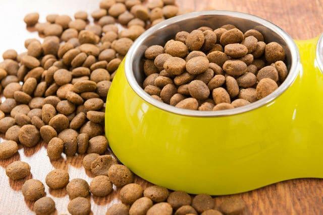Чем кормить джек-рассел-терьера – сухой корм