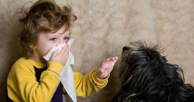 Симптомы аллергии на йорка у ребенка