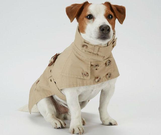 Одежда для рассел-терьера – плащ-дождевик