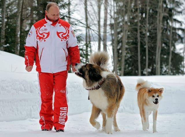 Президент Владимир Путин с собаками на прогулке