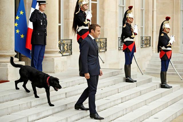 Эммануэль Макрон с собакой