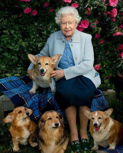 Елизавета II – фото с собаками