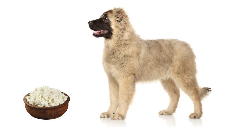 Чем кормить щенка кавказской овчарки