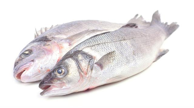 Рацион питания для беременной кавказской овчарки – морская рыба