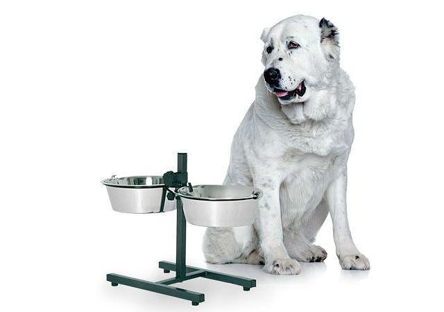 Особенности содержания алабаев – кормление взрослой собаки