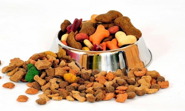 Сколько лет живут доги - правильное кормление собаки