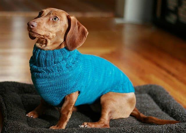 Вязаный свитер для таксы