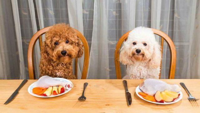 Чем кормить пуделя - размеры порции