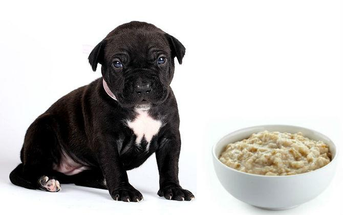 Чем кормить щенка питбуля - каши