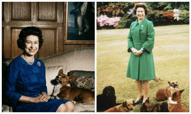 Королева Елизавета II с собаками корги