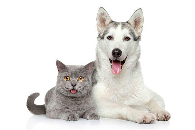 Кошки и собаки - уровень интеллекта