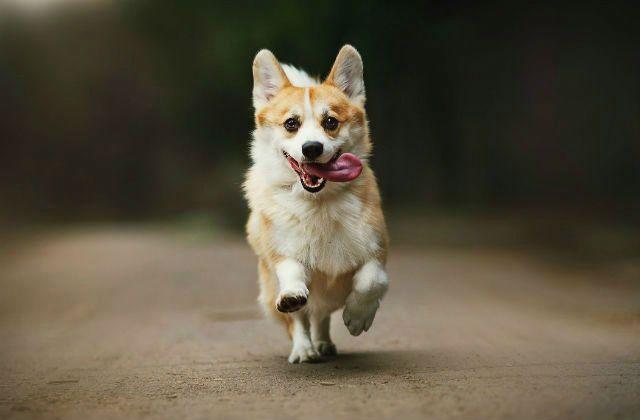 Пемброк бежит
