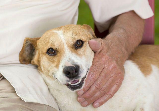 Топ - Самые долгоживущие собаки