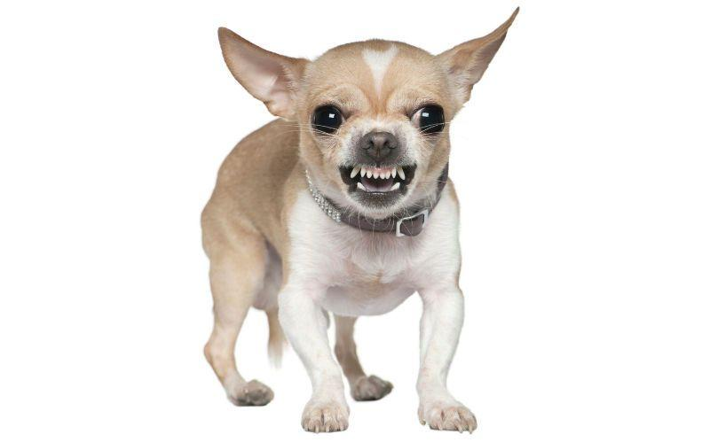 Топ - Самые злые собаки