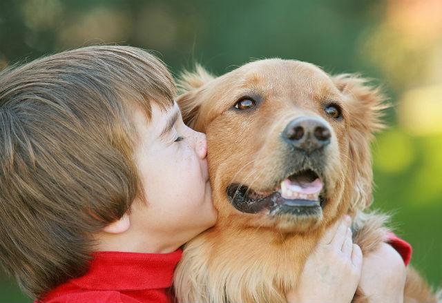 Топ лучших пород собак для детей