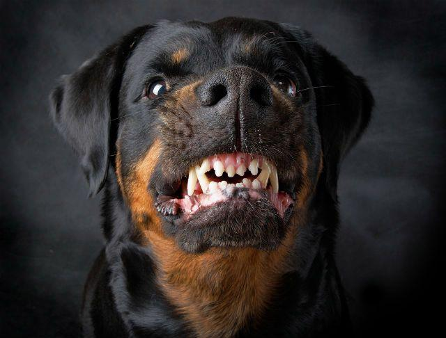 Топ - Собаки с самым сильным укусом