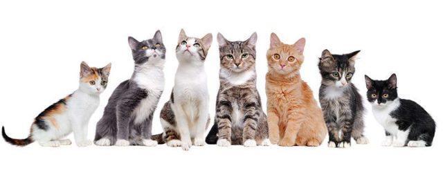 Беспородные кошки - главное фото