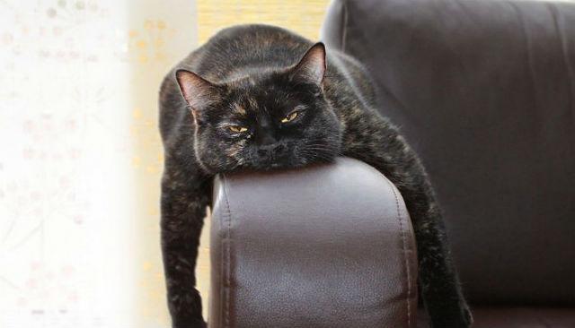 Кот спит на подлокотнике дивана