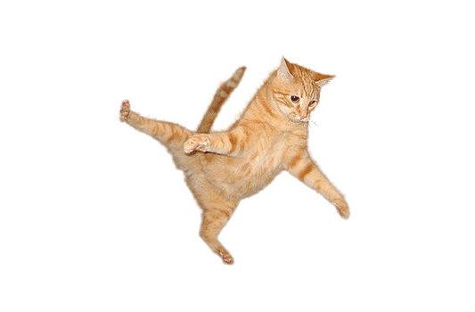 Рыжий котенок в прыжке