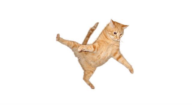 Кошка Чито