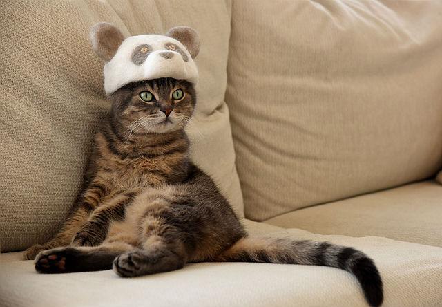 Беспородная кошка в квартире