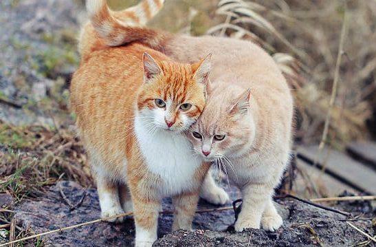 Две кошки на улице