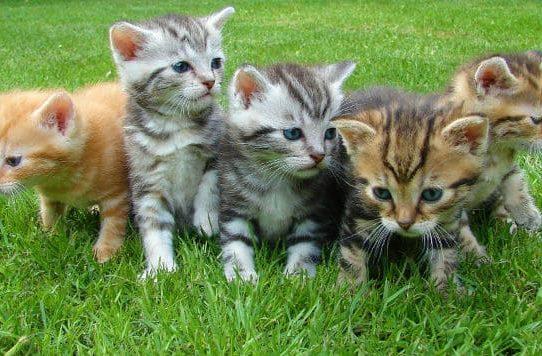 Котята на зеленой лужайке