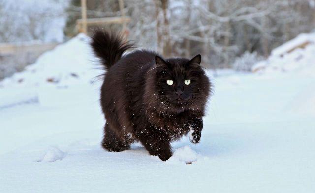 Черный уличный кот