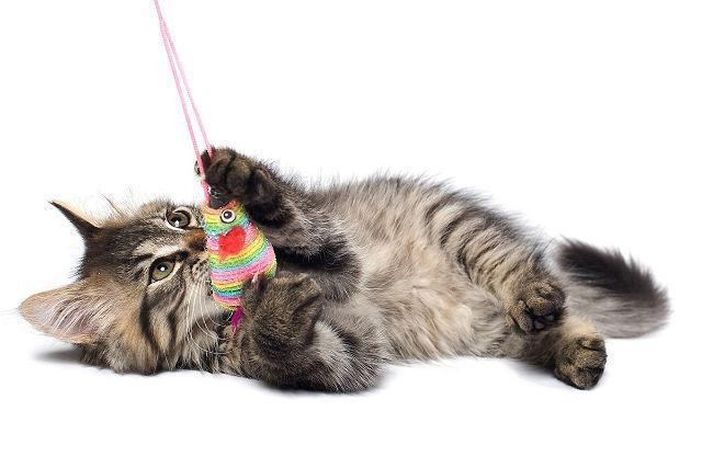 Серый полосатый котенок