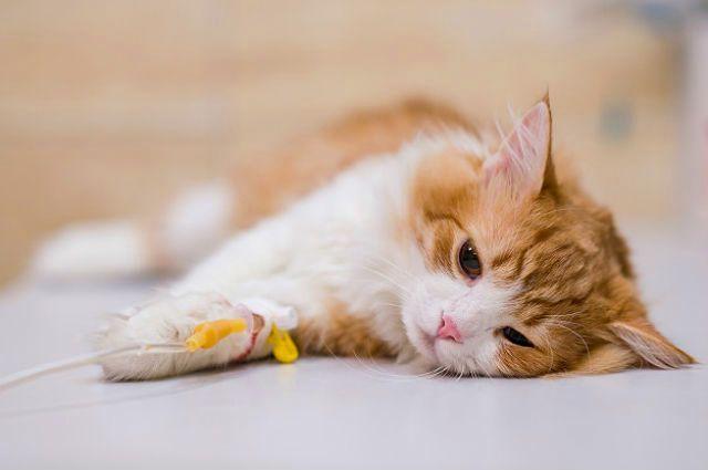 Капельница коту - фото
