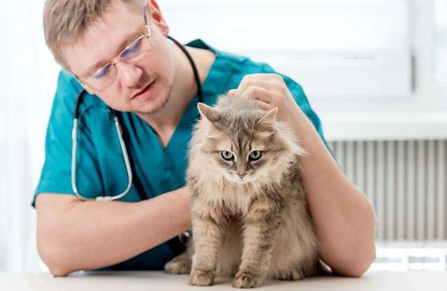 Капельница коту - помощь ветеринара