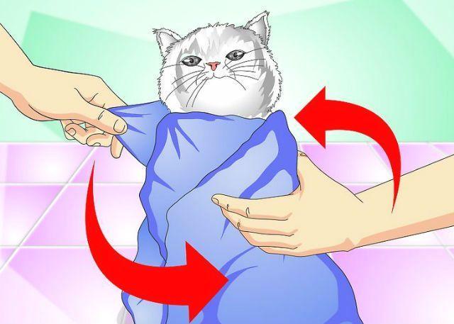 Капельница коту - фиксация животного