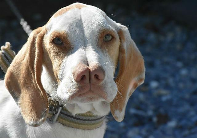 Самые страшные собаки - Каталбурун