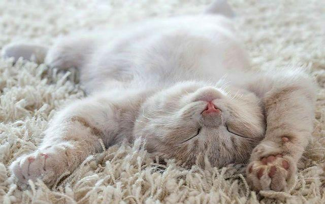 Кот спит на ковре