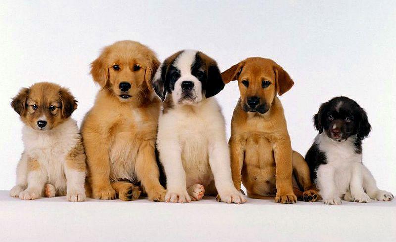 Лучшие клички для собак - главное фото