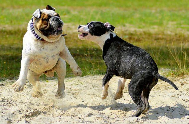 Популярные клички для собак
