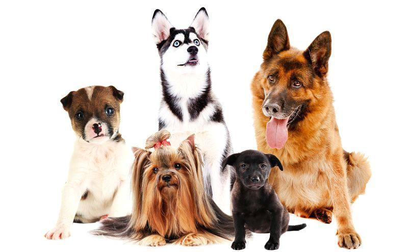 Самые лучшие породы собак - фото