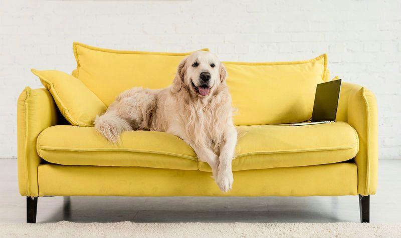 Самые неприхотливые собаки для дома - фото