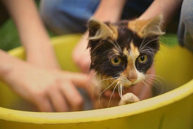 Купание кошки с дегтярным мылом