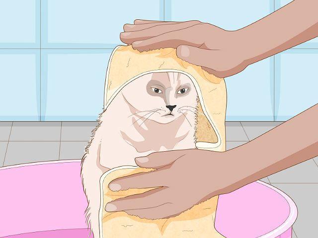 Правила купания кошки с дегтярным мылом