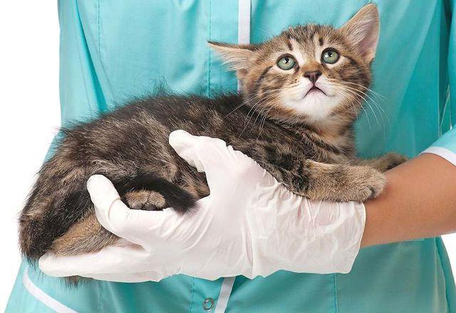 Как глистогонить кошку - главное фото