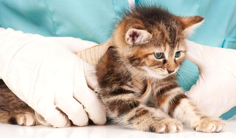Как глистогонят котят - главное фото