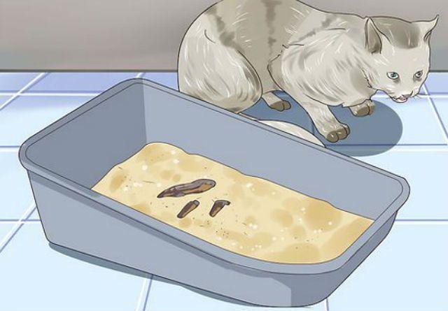 Обработка котенка от глистов