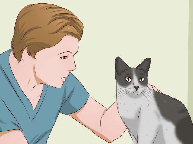 Кошка - приучение к лотку в домашних условиях