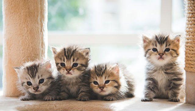 Определение пола котенка по весу